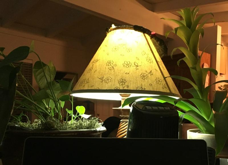 plantsback